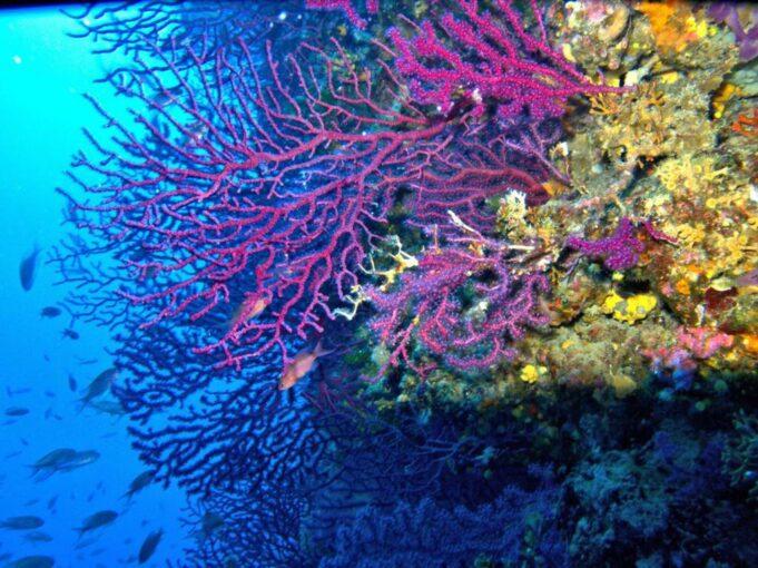 İklim değişikliğinin Akdeniz'deki etkileri endişe verici
